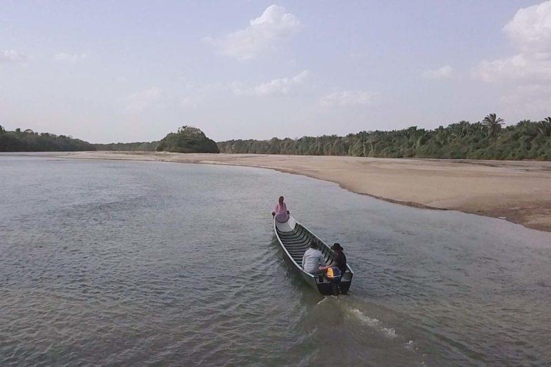 Bongo río Cravo Sur